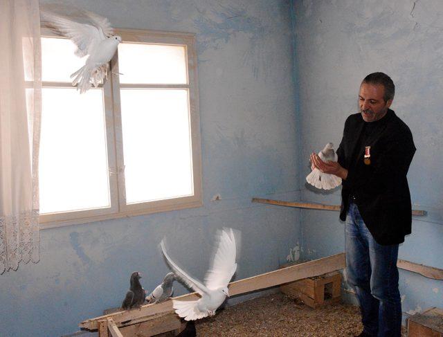 Güvercinleri için 2 ev kiraladı