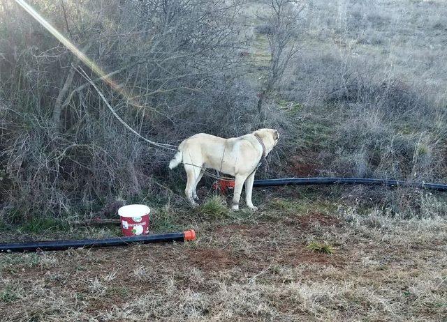 Köpek dövüşü arenasına jandarma baskını