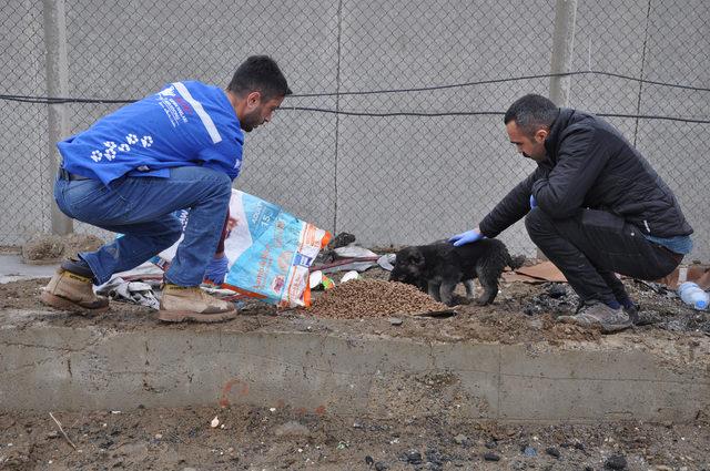 Yüksekova'da sokak hayvanlarına 2 ton mama bırakıldı