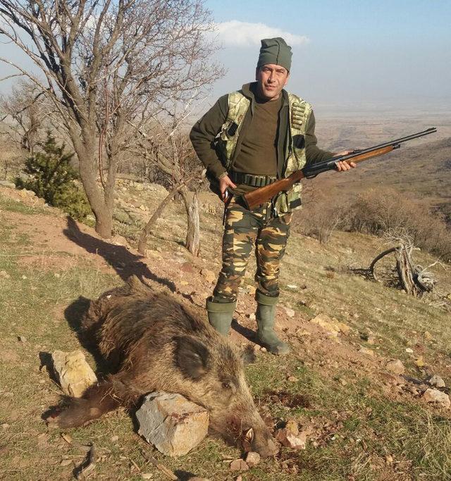 Sürek avında, 30 yaban domuzu vuruldu