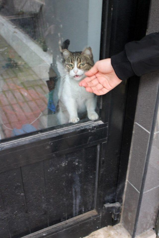 Dükkanda kilitli kalan kedi Yalova'yı ayağa kaldırdı