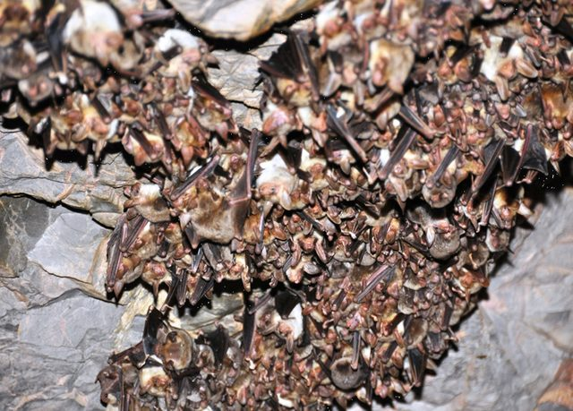 Havran'daki yarasalar suni mağarayı kullanıyor