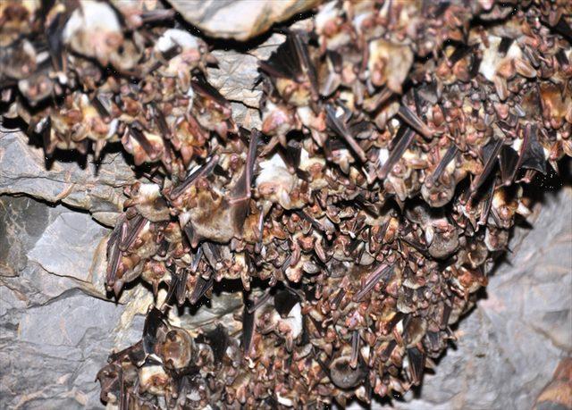 Havran'daki suni mağara yarasaların yuvası oldu<br />
