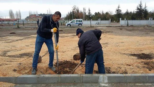 Şuhat'ta Asri mezarlığa 300 adet fidan dikildi