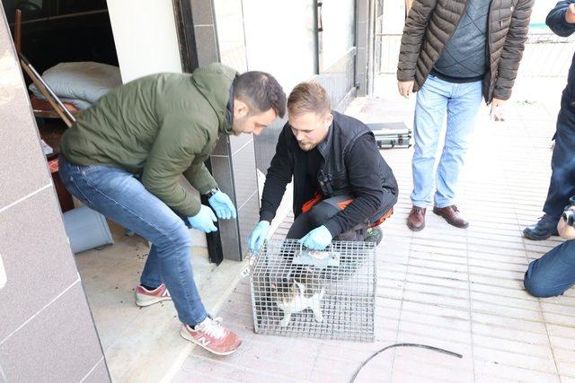 Dükkanda mahsur kalan kedinin 3 haftalık esareti sona erdi