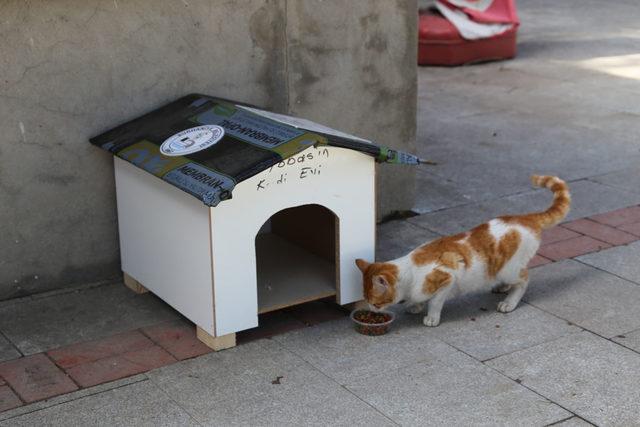 Burhaniye'de minik öğrencilerden kedilere yuva