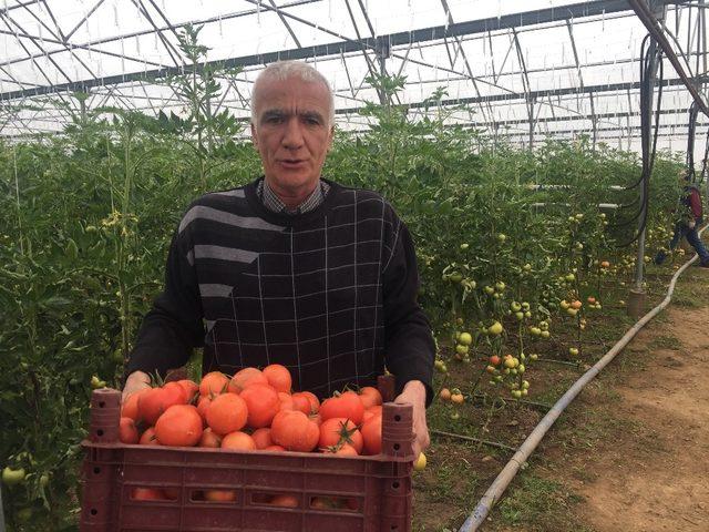 İslahiye MYO'da Organik Tarım Öğrencileri Organik Domates Yetiştirdi