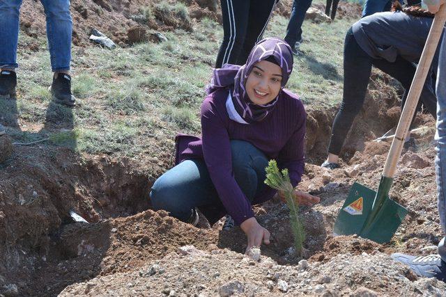 Suşehri'nde üniversite öğrencileri fidan dikti