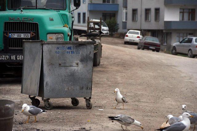 Sinop'ta martıların yiyecek kapma yarışı