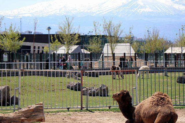Hayvanat bahçesi yaza hazırlanıyor