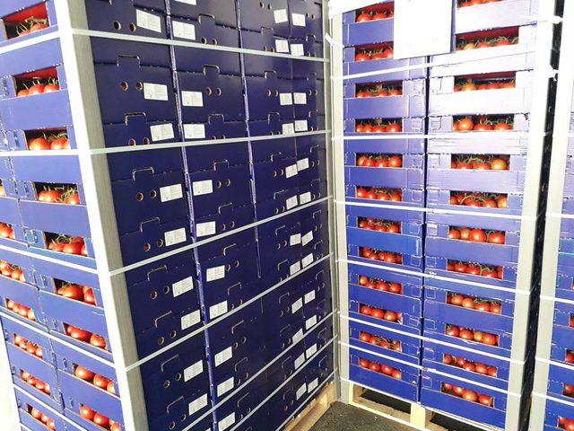 Rusya'ya Salihli'den domates ihracatı