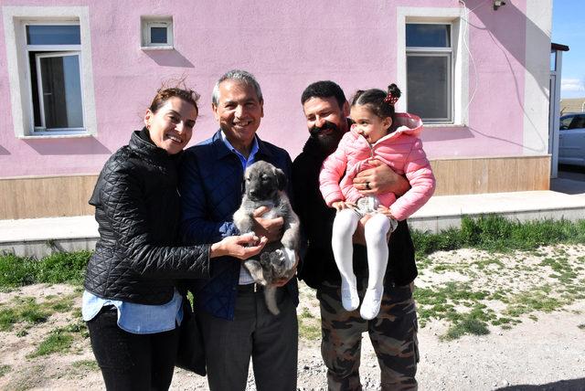 Abbas Güçlü'nün Kangal sevgisi