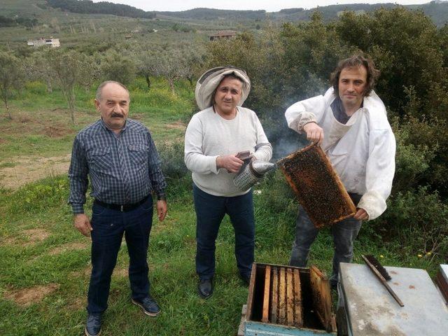 Bal hasadına Mudanyalı üreticilerden katkı