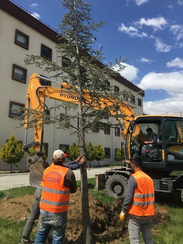 Refüjdeki Ağaçlar Hastane Bahçesine naklediliyor