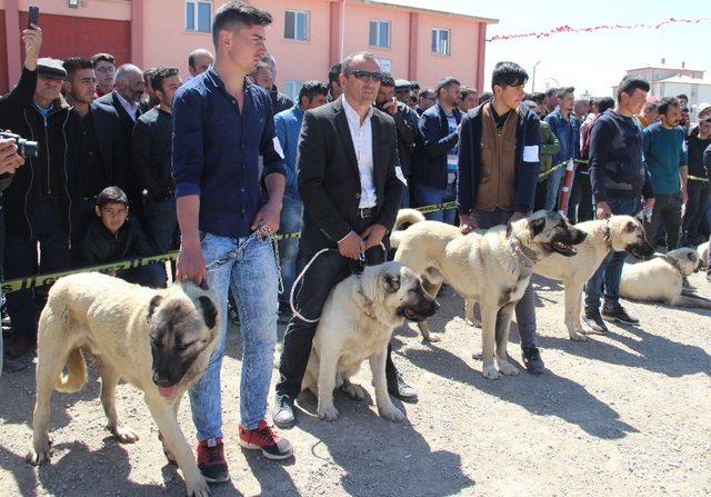 Sivas ilginç bir yarışmaya ev sahipliği yaptı
