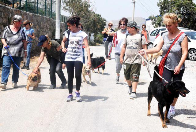 Barınaktaki sokak köpeklerini gezdirdiler