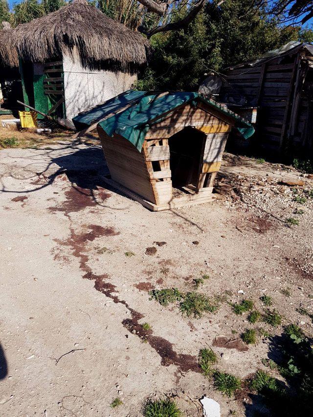 Çeşme'de 3 köpek av tüfeğiyle öldürüldü