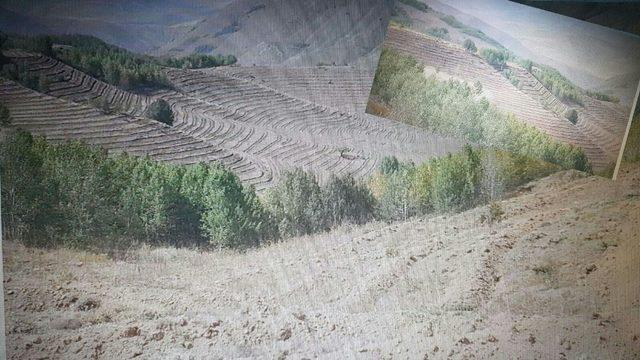 Erzurum'da ağaçlandırma seferberliği