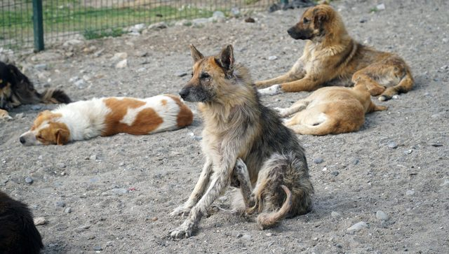 Hayvanseverlerden barınaktaki köpeklerin durumuna tepki
