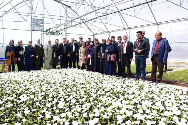 İpekyolu Belediyesinden çiçek üretim serası