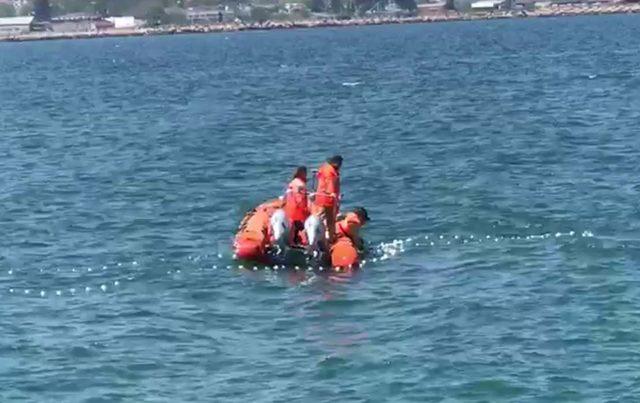 Denizde ağa takılan yunus 3 saatlik operasyonla kurtarıldı
