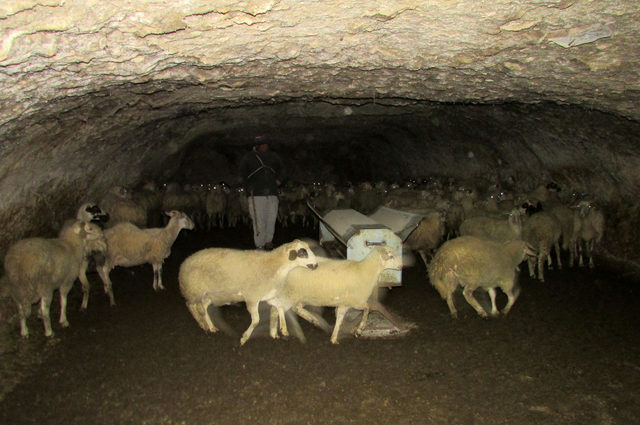 Mağaralarda besicilik yapıyorlar