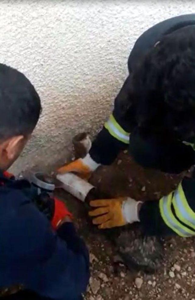 Kafası su borusuna sıkışan kedi, itfaile tarafından kurtarıldı