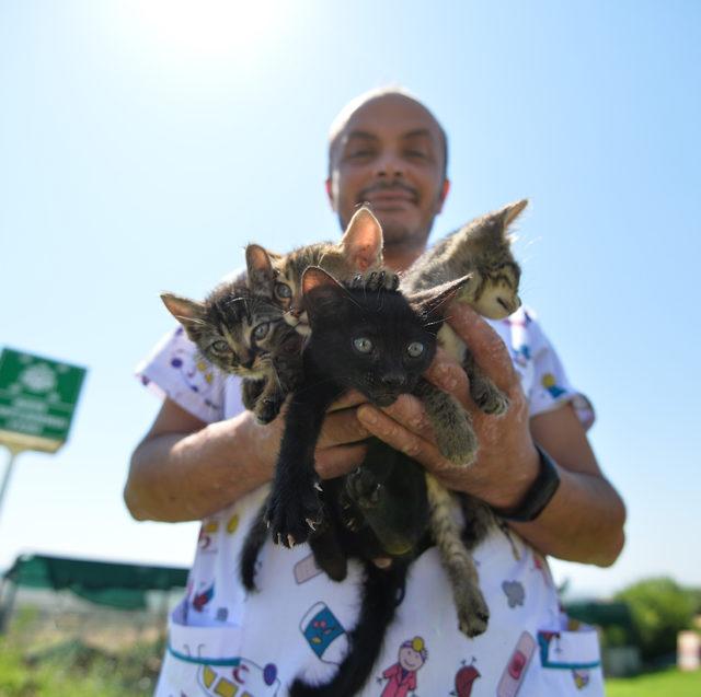 Bu müzayedede artırmalar kedi- köpek mamalarıyla