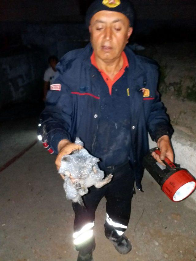 Yangında mahsur kalan 3 yavru kediyi itfaiye kurtardı