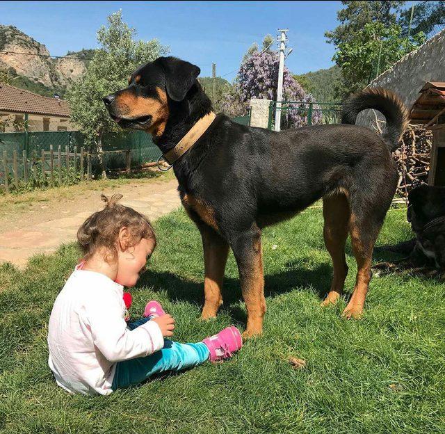 Marmaris'te iki köpek zehirlenerek öldürüldü