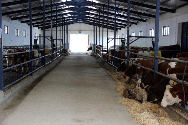 6 çocuk annesi, 800 bin lira hibe desteği ile besi çiftliği kurdu