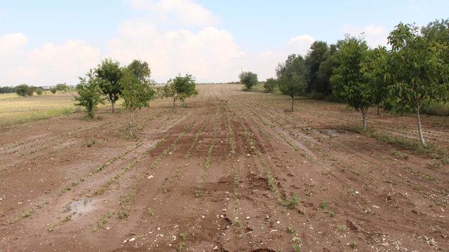 Burdur'da Haziran ayında 105 bin dekar ekili alan zarar gördü