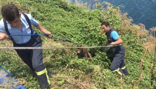 Uçurumda mahsur kalan köpek kurtarıldı
