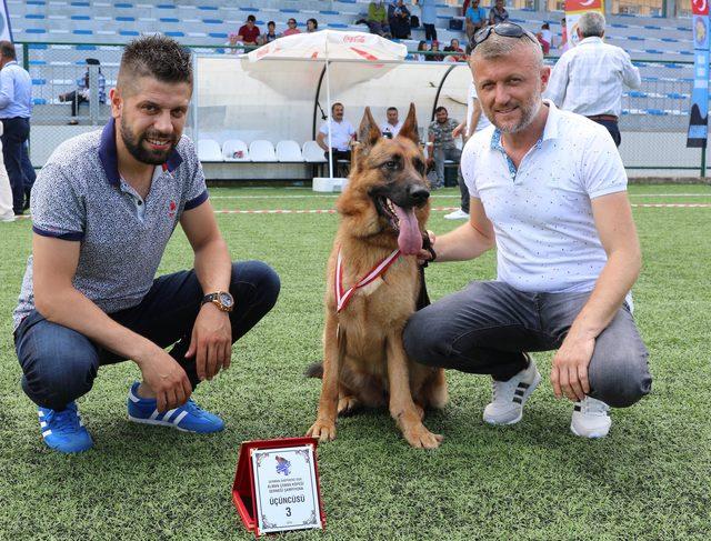 Alman kurdu köpekler yarıştı, 'Zibbo' birinci oldu
