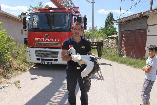 Çankırı'da elektrik tellerine takılan leyleği itfaiye kurtardı