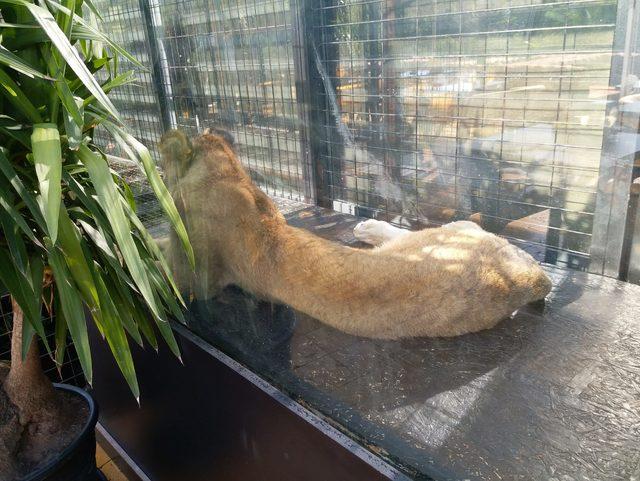 Nargile kafe hayvanat bahçesi çıktı