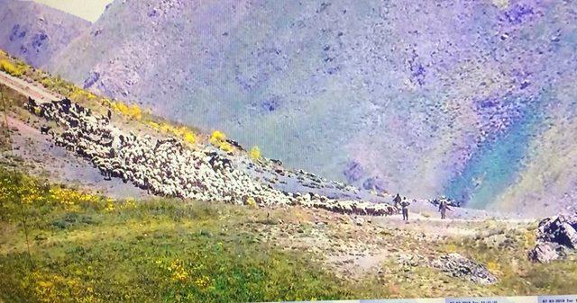 İran askerleri sınırda 970 hayvana el koydu, 4 çobanı gözaltına alındı