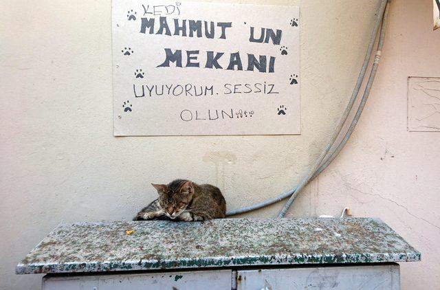 Kedi, elektrik panosunu yuva yaptı
