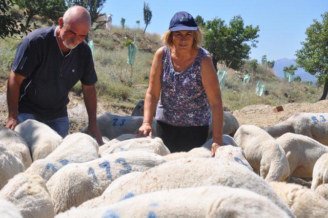 Gurbetçi çift, çiftlik kurup hayvancılığa başladı