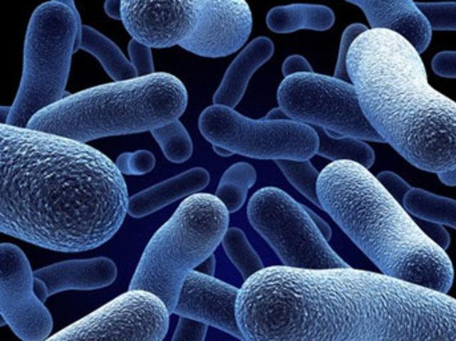 Bursa'da kaçak mikroorganizma operasyonu