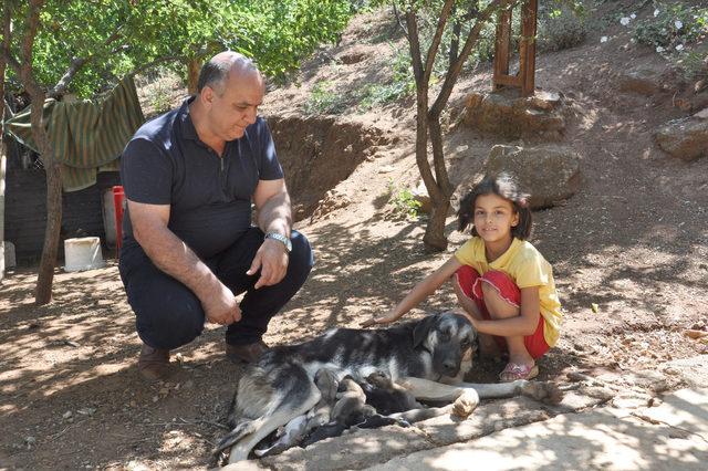 'Karakız' tek batında 13 yavru doğurdu