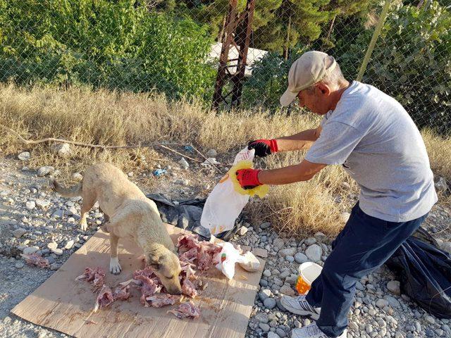Botan Vadisi'nin başıboş köpeklerini besliyor