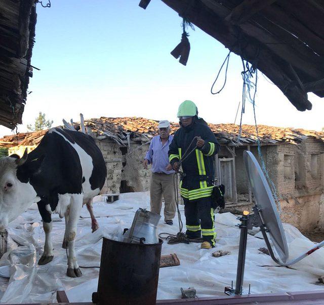 Ahır çatısına çıkan inek vinçle indirildi