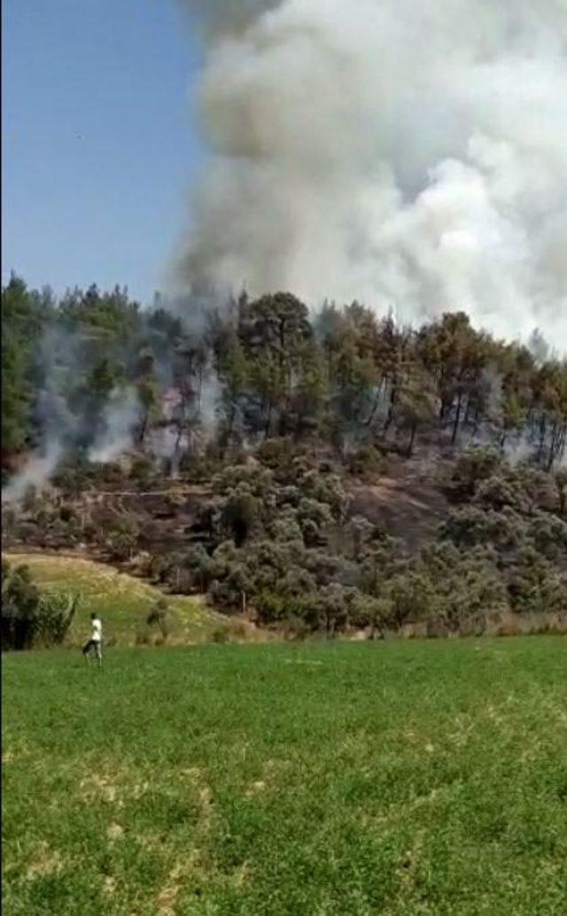 Menderes'te 2 dönüm zeytinlik yandı