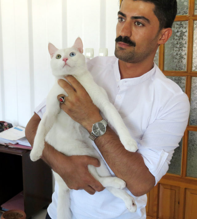 Kliniğe 'kedim sondaya mahkum kaldı' davası