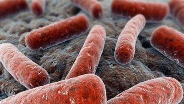 verem tuberkuloz