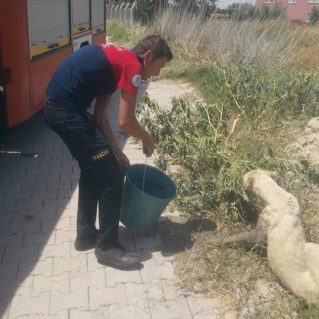 İki gündür çamura saplı kalan köpeği itfaiye kurtardı