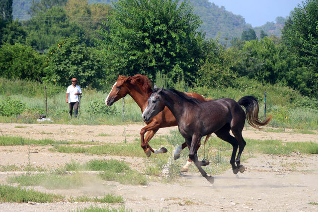 Tarihi film ve diziler, at çiftliklerine ilgiyi artırdı