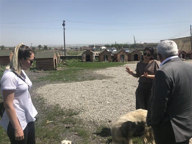 Kars'taki hayvan barınağı sorumluları hakkında soruşturma başlatıldı (2)