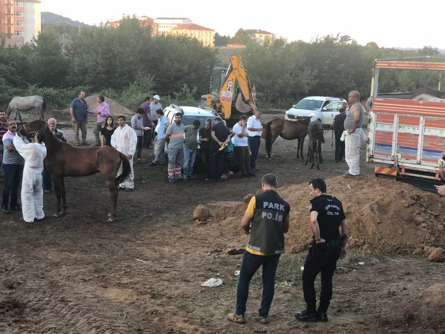 Beykoz'da bekletilen atlar sevk edilmeye başlandı